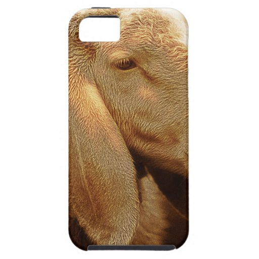 Long Eared Sheep Dolomites, Italy iPhone 5 Case
