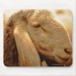 Long Eared Sheep Dolomites, Italy Mouse Pad