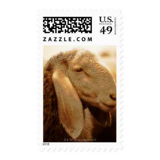 Long Eared Sheep Dolomites, Italy Stamp