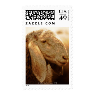 Long Eared Sheep Dolomites, Italy Postage Stamp