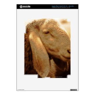 Long Eared Sheep Dolomites, Italy Skin For iPad 3