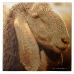Long Eared Sheep Dolomites, Italy Tile