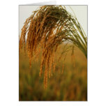 Long Grain Rice Greeting Cards