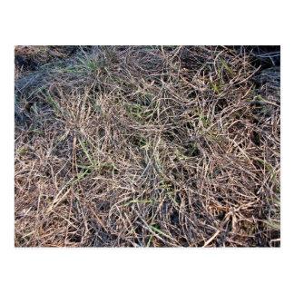 Long Grass Field Texture Shining in Sunlight Postcard