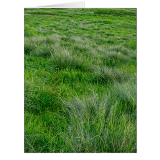 Long grasses in a vast grassland large greeting card