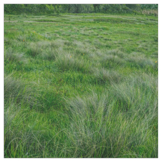 Long grasses in a vast grassland fabric
