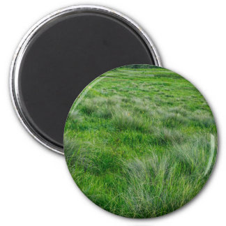 Long grasses in a vast grassland 2 inch round magnet