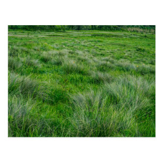 Long grasses in a vast grassland postcard