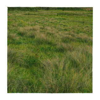 Long grasses in a vast grassland drink coaster