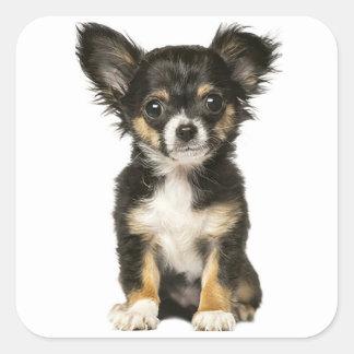 Long Hair Chihuahua Puppy Dog - Black Brown White Square Sticker