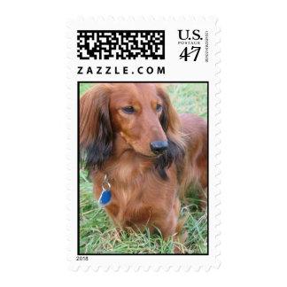 Long Hair Dachshund Postage Stamp
