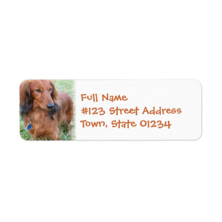 Long Hair Daschund Return Address Label