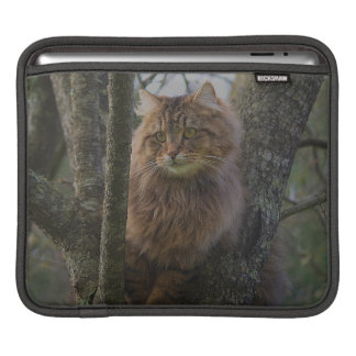 Long-hair Maine Coon Animal Pet iPad Sleeve