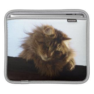 Long-hair Maine Coon Animal Pet iPad Sleeve