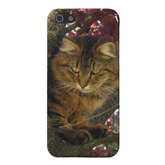 Long-hair Maine Coon Cat Animal Photo iPhone Case