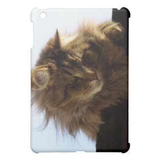 Long-hair Tabby Cat Animal  Case For The iPad Mini