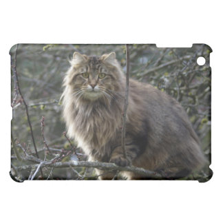 Long-hair Tabby Cat Animal iPad Case