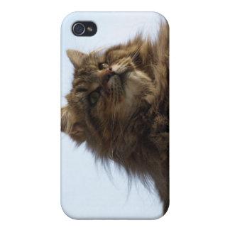 Long-hair Tabby Cat Animal iPhone Case