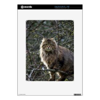 Long-hair Tabby Cat Animal Pet iPad Skin