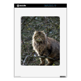 Long-hair Tabby Cat Animal Pet iPad Skin