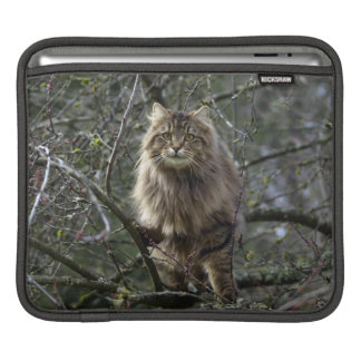 Long-hair Tabby Cat Animal Pet iPad Sleeve