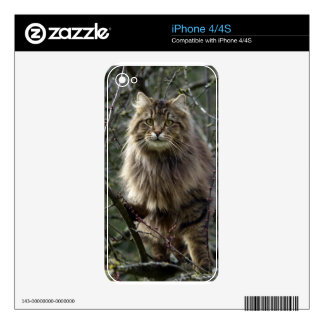Long-hair Tabby Cat Animal Pet iPhone Skin iPhone 4S Decals