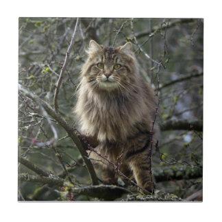 Long-hair Tabby Cat Animal Pet Tile