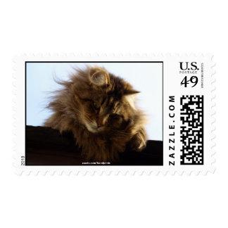 Long-hair Tabby Cat  Animal Stamp