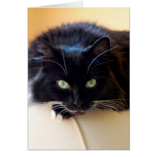 Long Haired Cat Greeting Card