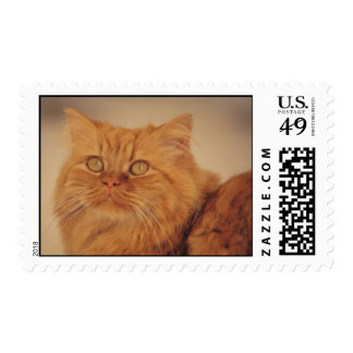 Long-haired Cat Postage Stamps