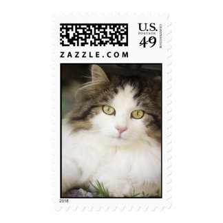 Long haired cat stamp