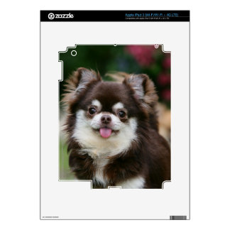Long Haired Chihuahua Headshot 1 iPad 3 Skin