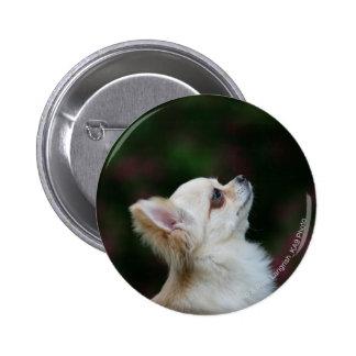 Long Haired Chihuahua Headshot 2 Button