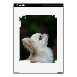 Long Haired Chihuahua Headshot 2 Decals For iPad 3