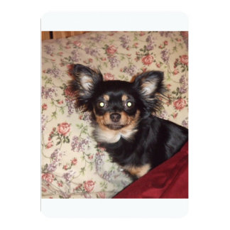 Long_haired_chihuahua.png 5x7 Paper Invitation Card