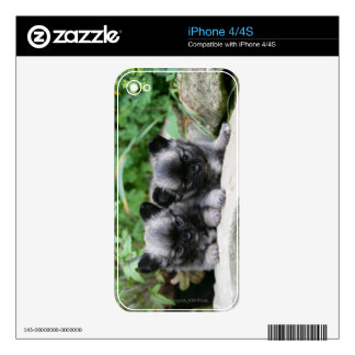Long Haired Chihuahua Puppies Skins For iPhone 4S