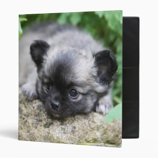 Long Haired Chihuahua Puppy 3 Ring Binder