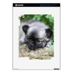 Long Haired Chihuahua Puppy iPad 3 Decal