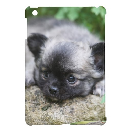 Long Haired Chihuahua Puppy iPad Mini Cases