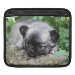 Long Haired Chihuahua Puppy iPad Sleeve