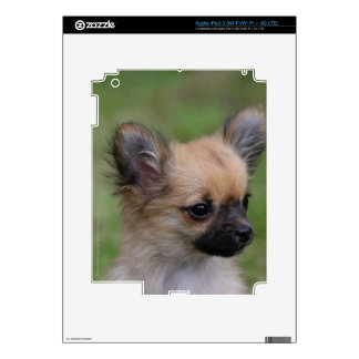 Long Haired Chihuahua Puppy Looking at Camera Decals For iPad 3