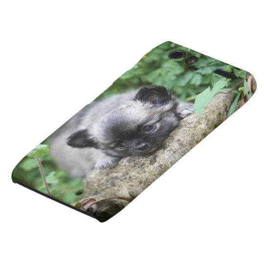 Long Haired Chihuahua Puppy Motorola Droid RAZR Cover
