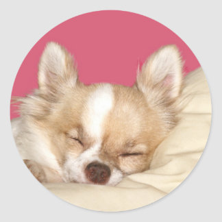 Long haired Chihuahua Round Stickers