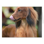 Long Haired Dachshund Cards