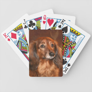 Long haired dachshund playing cards