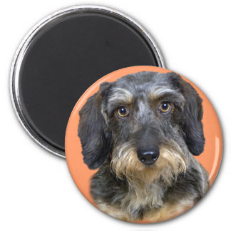 Long Haired Dachshund Magnets, Long Haired Dachshund Magnet Designs ...