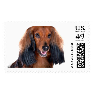 Long Haired Dachshund Postage Stamps