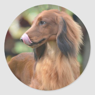 Long Haired Dachshund Round Stickers