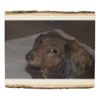 Long-Haired Dachshund Woodland Wooden Photo Panel