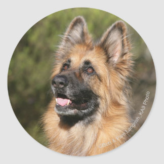 Long Haired German Shepherd 1 Classic Round Sticker